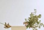 """古装奇幻电影《春江花月夜》于近期完成部分场景补拍工作,正式宣告全组杀青。8月23日,片方携手时尚杂志《嘉人》,曝光了一组由两位男主角共同演绎的奇幻古风大片。该组图中,陈立农和李现一起泛舟江上,最好的年华,意气风发,不禁让人感叹""""陌上谁家少年,足风流""""。"""