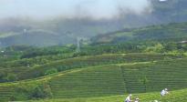 白茶野木瓜方竹笋,正安美食有哪些特色,值得姚晨倾力推荐?