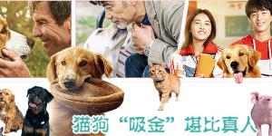 《宠爱》破6亿!宠物电影或成下一个风潮