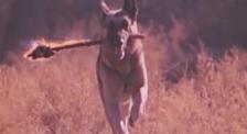 《大气层消失》超感人一幕 大狼狗舍身化解可怕的灾难