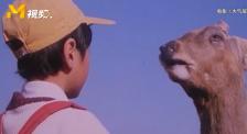 《大气层消失》动物们诉苦痛恨人类 震撼人心!
