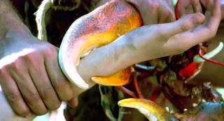 原始人没有手铐,就用大龙虾来替代,一部搞笑奇幻电影