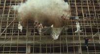 洪金宝回忆电影《龙的心》跳楼惊险动作