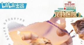 急救并未等到好结局《宠物医院3》展现宠物脆弱一面